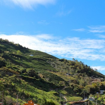 Clear skies over Lishan tea gardens
